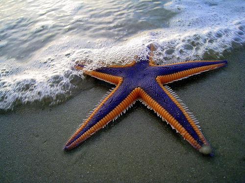 Purple And Orange Starfish: Be Happy Be Smiley